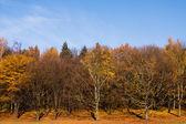 Bäume im Spätherbst — Stockfoto