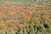 Uçuş görünümü sonbahar orman — Stok fotoğraf
