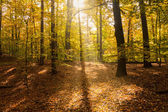Sonnenlicht im wald — Stockfoto