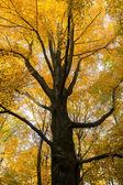 Tree in autumn — Stock Photo