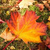 Single leaf on meadow — Stock Photo