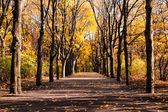 Alley in autumn — Stock Photo