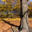 Tree in park in autumn — Foto de Stock