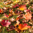 Autumn leaves on meadow — Stock fotografie