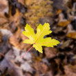 Single yellow leaf — Lizenzfreies Foto