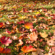Meadow with leaves — Foto de Stock