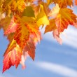 Red and orange leaves — Foto de Stock