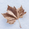 Single frozen leaf — Foto de Stock