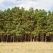 tree line — Stock Photo