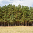 Stock Photo: Tree line