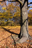 Tree in park in autumn — Stock Photo