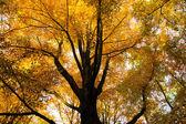 Träd i början av hösten — Stockfoto
