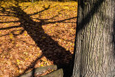 Shadow of a tree in autumn — Stock fotografie