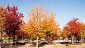 Ağaç güz — Stok fotoğraf