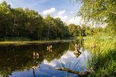 Sjön i sommar — Stockfoto