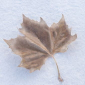 Frozen leaf — Stock Photo