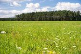 Landschaft im sommer — Stockfoto
