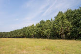 Tree line in landscape — Stock Photo