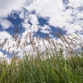 Gras — Stockfoto