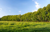 Trees in landscape — Stock Photo