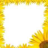 Sunflower border design — Stock Photo