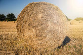 Straw bale in the sun — Stock Photo