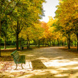 Stock Photo: Beginning of autumn