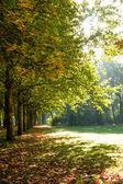Herbst baum im sonnenlicht — Stockfoto