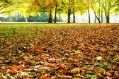 Sonbahar yaprakları — Stok fotoğraf