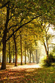 Trees in sunlight — Stock Photo