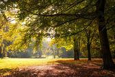 Baum im herbst — Stockfoto