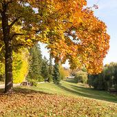 Baum in einem park im herbst — Stockfoto
