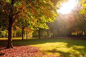 Autumn impressions — Stock Photo
