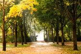 Začátek podzimu — Stock fotografie