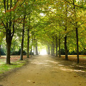 Spaziergang im park — Stockfoto