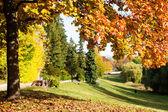 Albero d'autunno in un parco — Foto Stock