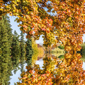 Autumn tree by a lake — Stock Photo