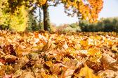Herfst bladeren in een park — Stockfoto