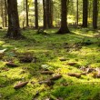 Stock Photo: Mossy forest floor