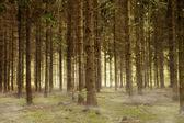 Foresta nebbiosa — Foto Stock