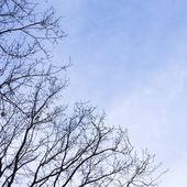 Strom v zimě — Stock fotografie