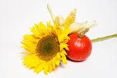 Sunflower, pumpkin and corn — Stock Photo