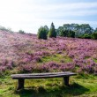 Stock Photo: Bench Lueneburg Heath