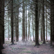 Stock Photo: Mystery forest