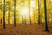 Las jesienią — Zdjęcie stockowe