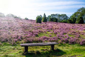 Bench Lueneburg Heath — Stock Photo