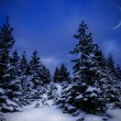 Winter landscape at night — Stock Photo