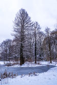 Trees in winter park — Stock Photo