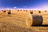 Straw bales on field in evening — Stock Photo