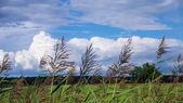 Grasses — Stock Photo